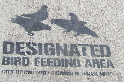 Birdfeeding